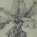 Drawings - Pen and ink on paper 8